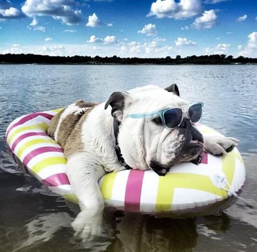Enjoy your summer, Bulldogs!